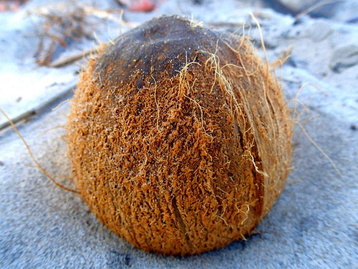 Ouvrir une noix de coco