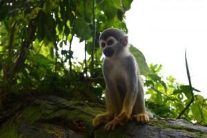 Photo d'un singe sur un tronc d'arbre