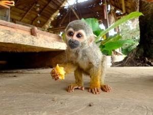 Photo d'un petit singe tout mignon qu'on voudrait bouffer tout cru