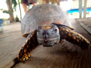 Photo d'une petite tortue