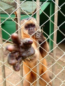 Photo d'un singe en cage dans un zoo