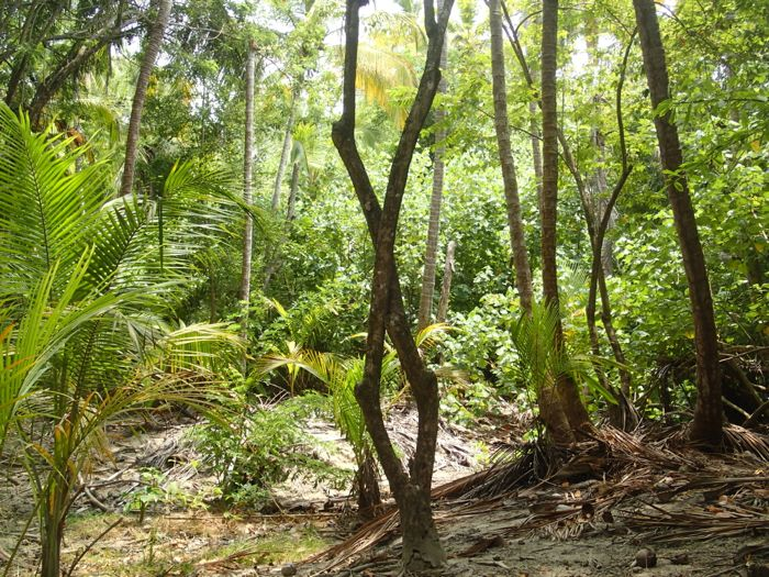 Photo de la foret de Tayrona