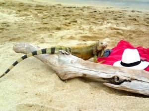 Photo de l'iguane sur notre serviette