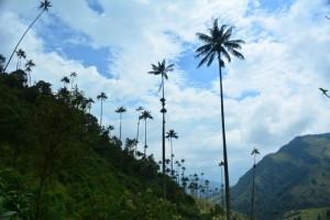 Vue de la Vallée de Cocora