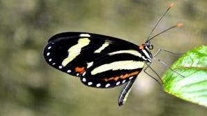 Session photo dans une ferme de papillon